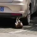 Cat abdominal?